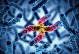 Is your life predetermined by your genes and DNA?